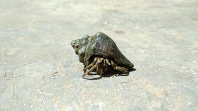 Acción de la foto del primer de las conchas marinas Fotos de archivo libres de regalías