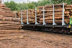 Acción de la madera Foto de archivo