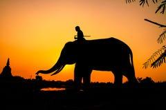 Acción de la silueta del elefante Fotos de archivo