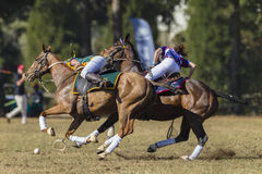 Acción de las mujeres de los jinetes del caballo de PoloCrosse Foto de archivo