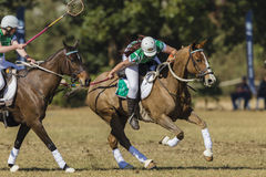 Acción de las mujeres de los jinetes del caballo de PoloCrosse Imagenes de archivo