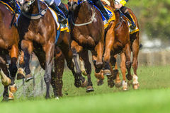 Acción de las piernas de Hoofs de los animales de la carrera de caballos Foto de archivo