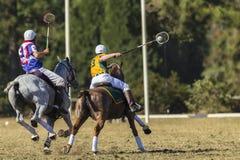 Acción de los jinetes de los caballos de PoloCrosse Fotografía de archivo libre de regalías