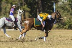 Acción de los jinetes de los caballos de PoloCrosse Imagen de archivo