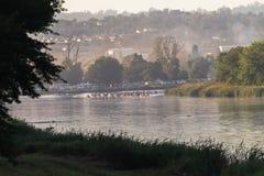 Acción de los rápidos de la raza de la canoa Foto de archivo