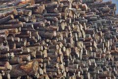 Acción de madera Fotografía de archivo