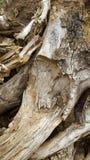 Acción de madera Fotos de archivo