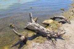 Acción de madera en la playa Foto de archivo libre de regalías