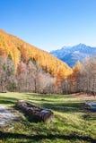 Acción de madera en un panorama otoñal colorido en Italia Foto de archivo