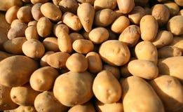Acción de patatas Fotos de archivo libres de regalías