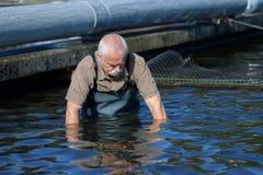 Acción de pescados del hombre que cuida mayor en granja de pescados Imagen de archivo