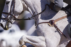 Acción de salto de la demostración del caballo Imagen de archivo libre de regalías