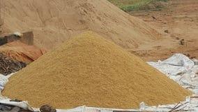 Acción del arroz Foto de archivo