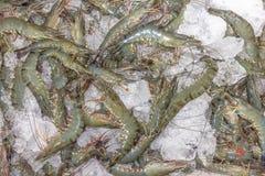 Acción del camarón Fotografía de archivo libre de regalías