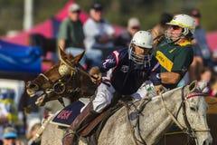 Acción del Equestrian del mundial de PoloCrosse Imagenes de archivo