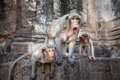 Acción del familery del mono Imágenes de archivo libres de regalías