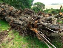 Acción del fondo de la corteza de árbol Foto de archivo