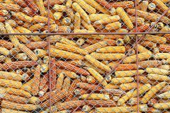 Acción del maíz Imagen de archivo libre de regalías