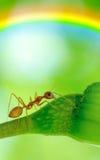 Acción macra de hormigas, insecto, naturaleza de la imagen Foto de archivo