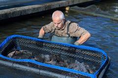 Acción que cuida del granjero mayor de los pescados Imagenes de archivo