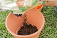 Acción que cultiva un huerto del estiércol vegetal del pote de la planta Imagen de archivo