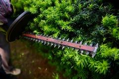Acción tirada de arbusto del corte del condensador de ajuste de seto Fotos de archivo