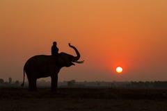 Acción y mahout del elefante de la silueta Foto de archivo libre de regalías