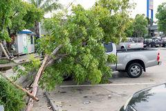 Accidents caused by storms and rain. Nakhorn Ratchasima-Thailand,May 8,2016:Heavy rain and gale force winds caused a tree fell on the car of the people using royalty free stock photos