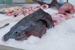 Accipenser-Studiofische auf Eis Lizenzfreies Stockbild