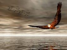 Accipitridae, American bald eagle. vector illustration