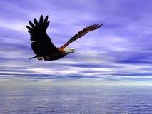 Accipitridae, Amerikaanse kale adelaar. Royalty-vrije Stock Afbeeldingen