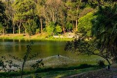 Acclimatisatiepark in de eend van Sao Paulo Brazilië het zwemmen royalty-vrije stock afbeeldingen