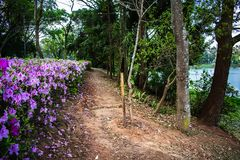 Acclimatisatiepark in het bos van Sao Paulo Brazilië van klei onder bomen royalty-vrije stock fotografie