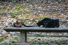 Acclimatisatiepark in Sao Paulo Brazilië drie verlaten katten stock foto's