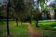 Acclimatization park in sao paulo brazil Red flowered trees sleep royalty free stock photo