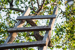 Accommodation ladder to fruit tree in green garden Royalty Free Stock Photography