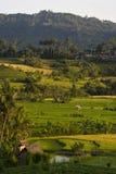Accompagnateurs, Bali, terrasses de riz Images libres de droits