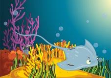 Accompanied ray. Sting ray accompanied by smaller fish Royalty Free Stock Photography