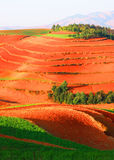 Accompanied by red trees land terraced landscape Royalty Free Stock Photos