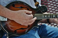 A musician playing a mandolin. Stock Photos