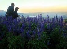 Accoppi adorabile a paesaggio con alta erba selvatica ed i fiori porpora sulla collina in alta montagna Fotografia Stock