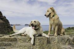 Accoppi dei cani che si siedono con un bello paesaggio fotografia stock