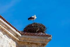 Accoppi delle cicogne che fanno un nido sul campanile di una chiesa immagini stock