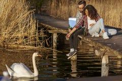 Accoppi i cigni d'alimentazione nel lago immagini stock