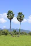 Accoppiamenti degli alberi. Immagine Stock