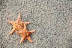 Accoppiamenti delle stelle marine immagini stock