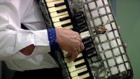 Accordion stock video