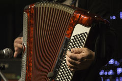 Accordion player during a concert Royalty Free Stock Images