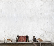 Accordion and two cats. Sitting on the bench near the wall Royalty Free Stock Photo