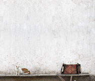 Accordion and white cat. Sitting on the bench near the wall Royalty Free Stock Photography
